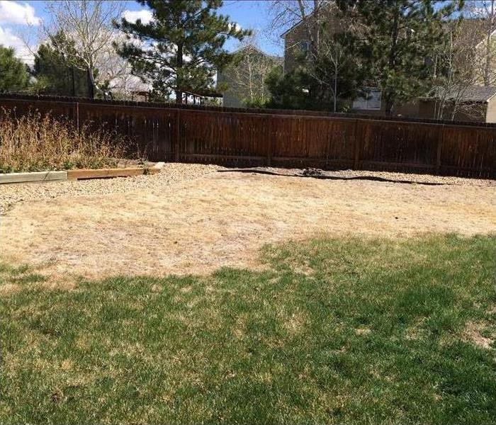 Dry grass in a person's backyard